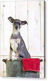Cute Dog Washtub Acrylic Print by Edward Fielding