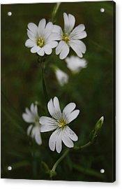 Cute Flowers Acrylic Print by Gynt