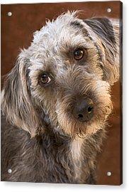Cute Pup Acrylic Print by Natalie Kinnear