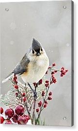 Cute Winter Bird - Tufted Titmouse Acrylic Print by Christina Rollo