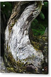 Cycle Of Life Acrylic Print by Bill Caldwell -        ABeautifulSky Photography