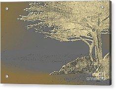 Cypress Tree On Beach Acrylic Print by Linda  Parker
