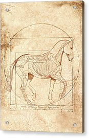 da Vinci Horse in Piaffe Acrylic Print by Catherine Twomey