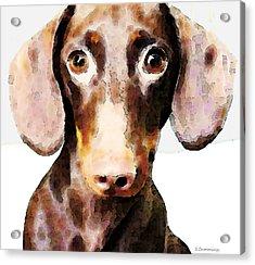 Dachshund Art - Roxie Doxie Acrylic Print by Sharon Cummings