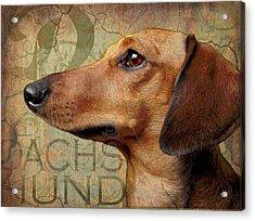 Dachshund Acrylic Print by Wendy Presseisen