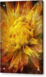 Dahlia Abstract Acrylic Print by Garry Gay