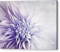 Dahlia Sun Acrylic Print by Priska Wettstein