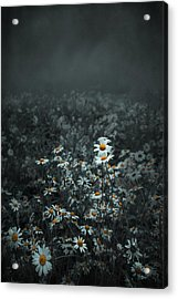 Daisies-daisies Acrylic Print by Svetlana Sewell