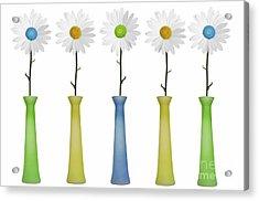 Daisies Acrylic Print by Diane Diederich