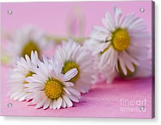 Daisies On Pink Acrylic Print by Jan Bickerton