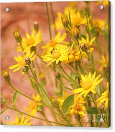 Daisy A Day Series  Acrylic Print by Julie Lueders