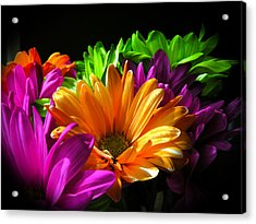 Daisy Delight Acrylic Print by David Quist