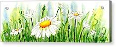 Daisy Field Acrylic Print by Annie Troe