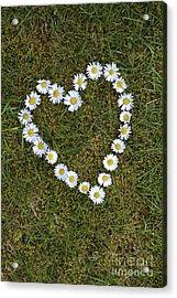 Daisy Heart Acrylic Print by Tim Gainey
