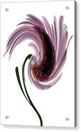 Daisy In A Twirl Acrylic Print by Terence Davis