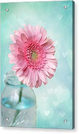 Daisy Love Acrylic Print by Amy Tyler