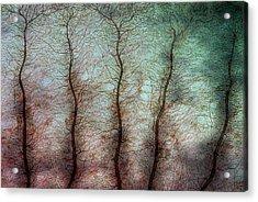 Damselfly Larva Gill Acrylic Print by Marek Mis