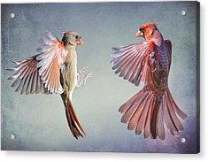 Dance Of The Redbirds Acrylic Print by Bonnie Barry