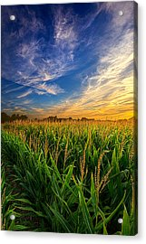 Dancing In The Rows Acrylic Print by Phil Koch