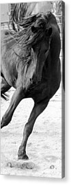 Dancing In Time Acrylic Print by Royal Grove Fine Art