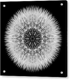 Dandelion Head Flower Mandala Acrylic Print by David J Bookbinder
