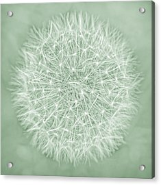 Dandelion Macro Abstract Soft Green Acrylic Print by Jennie Marie Schell
