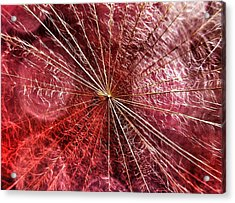 Dandelion Seed Abstract Acrylic Print by Marianna Mills
