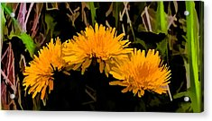 Dandelions In Group Si By Leif Sohlman Acrylic Print by Leif Sohlman