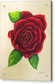 Dark Red Rose Acrylic Print by Zina Stromberg