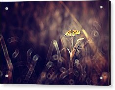 Dark Violet Acrylic Print by Donald Jusa