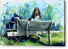 Darn Dog Days Acrylic Print by Hanne Lore Koehler