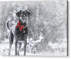Dashing Through The Snow Acrylic Print by Lori Deiter