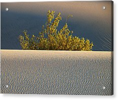Dawn Mesquite  Acrylic Print by Joe Schofield