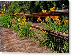 Day Lilies Acrylic Print by Michael Pickett