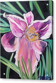 Daylily Acrylic Print by Melissa Torres