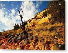 Dead Tree Against The Blue Sky Acrylic Print by Jeff Swan