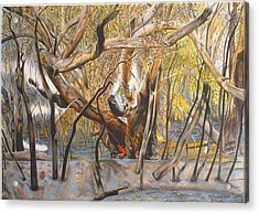 Death Of A Gum Tree Acrylic Print by Michelle Ripari