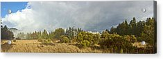 December Henry Cowell Sunrise Panorama Acrylic Print by Larry Darnell