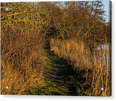 december light - Leif Sohlman Acrylic Print by Leif Sohlman