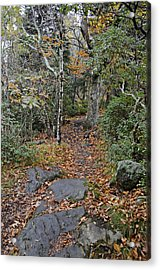 Deep In The Woods Acrylic Print by Susan Leggett