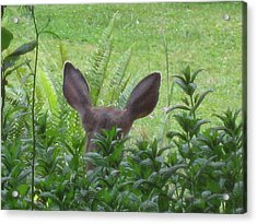 Deer Ear In A Mint Patch Acrylic Print by Kym Backland