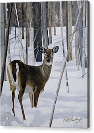 Deer In The Snow Acrylic Print by Bill Dunkley