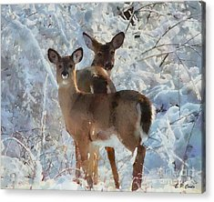 Deer In The Snow Acrylic Print by Elizabeth Coats