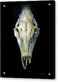 Deer Skull With Aura Acrylic Print by Catherine Twomey