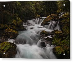 Delicate And Powerful Acrylic Print by Mike Reid