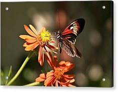 Delicate Beauty Acrylic Print by Michael Rucci