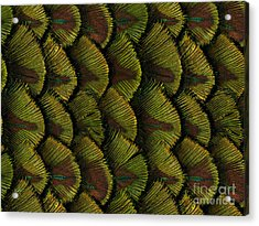 Delicate Feather Acrylic Print by Bedros Awak