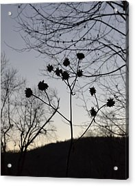 Delicate Silhouette Acrylic Print by Carlee Ojeda