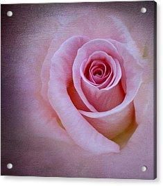 Delicately Pink Acrylic Print by Ivelina G