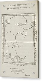 Delphinus Star Constellation Acrylic Print by British Library